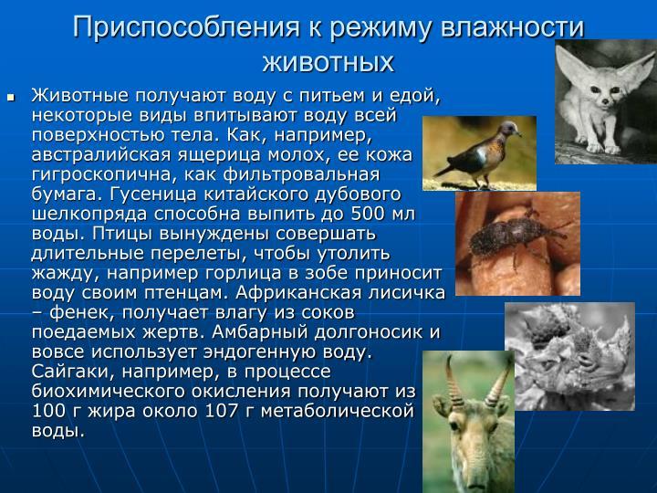 Приспособления к режиму влажности животных
