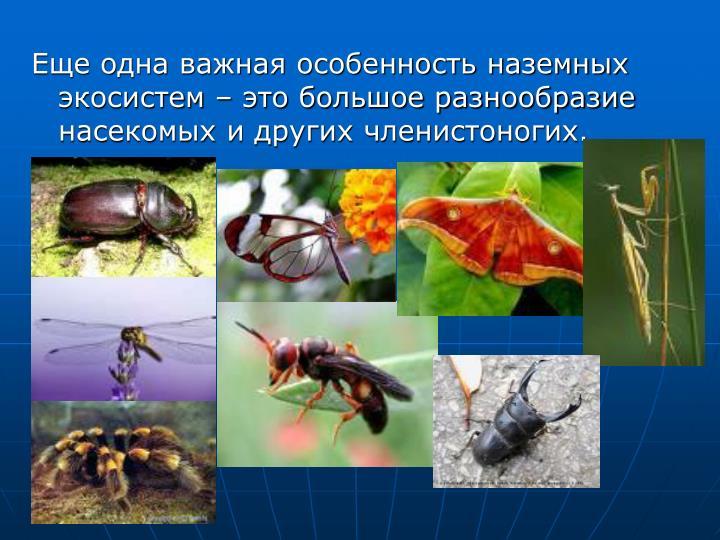 Еще одна важная особенность наземных экосистем – это большое разнообразие насекомых и других членистоногих.