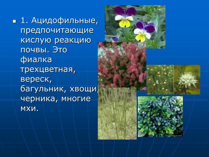 1. Ацидофильные, предпочитающие кислую реакцию почвы. Это фиалка трехцветная, вереск, багульник, хвощи, черника, многие мхи.