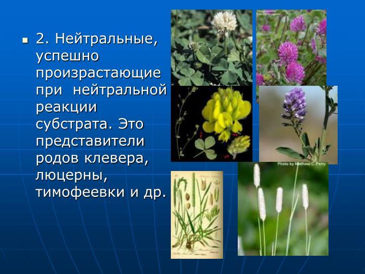 2. Нейтральные, успешно произрастающие при  нейтральной реакции субстрата. Это представители родов клевера, люцерны, тимофеевки и др.