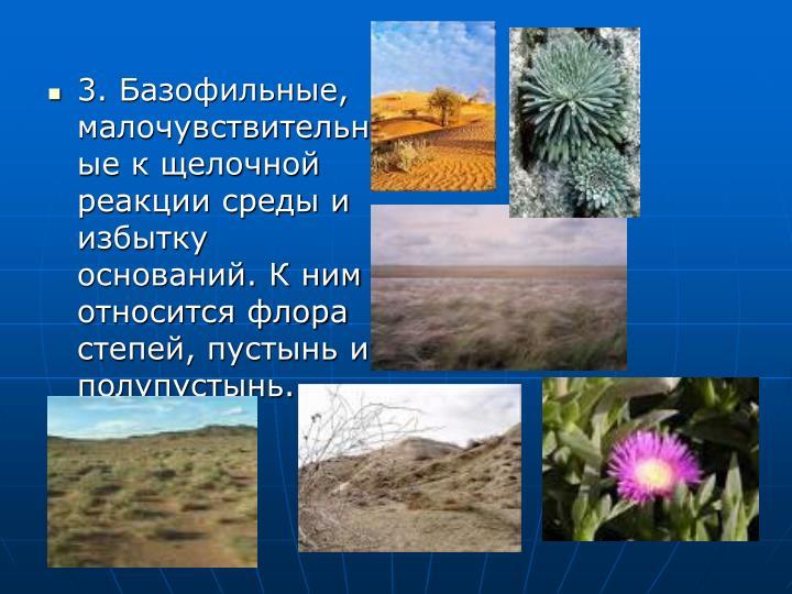 3. Базофильные, малочувствительные к щелочной реакции среды и избытку оснований. К ним относится флора степей, пустынь и полупустынь.