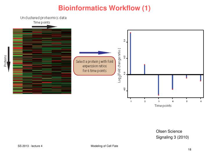 Bioinformatics Workflow (1)