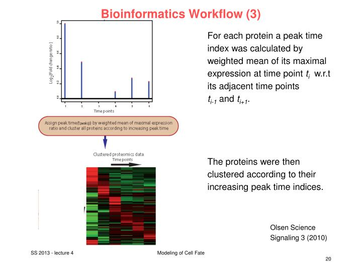 Bioinformatics Workflow (3)