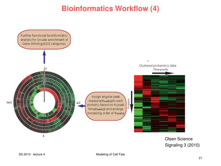 Bioinformatics Workflow (4)
