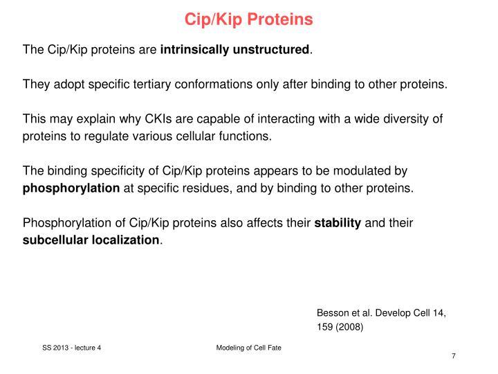Cip/Kip Proteins