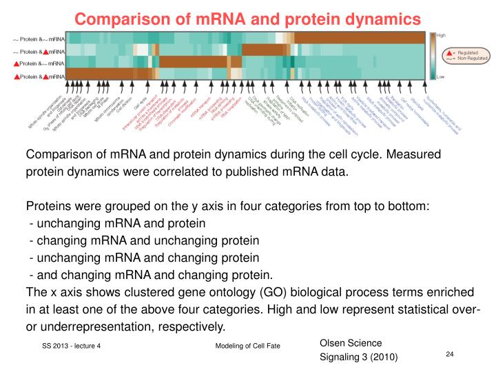Comparison of mRNA and protein dynamics