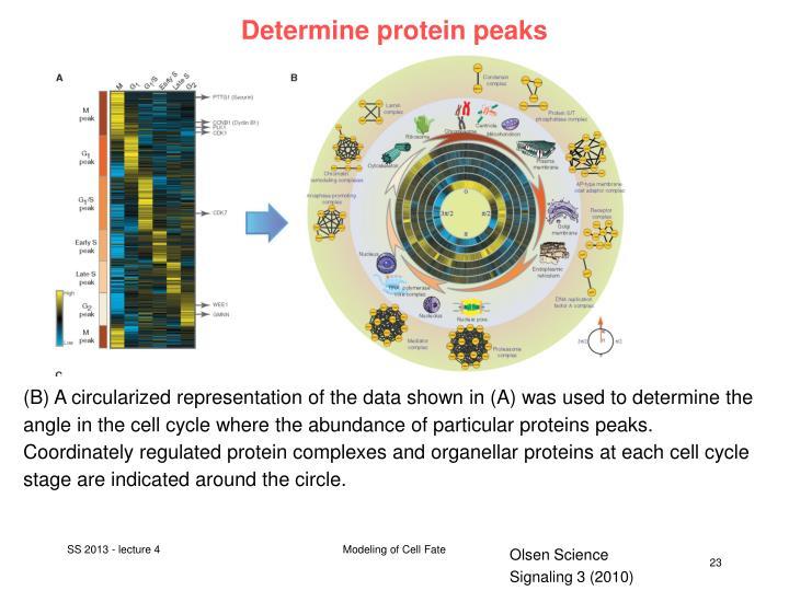 Determine protein peaks