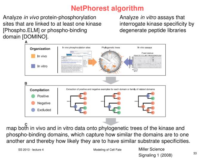 NetPhorest algorithm