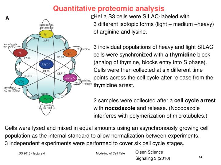 Quantitative proteomic analysis