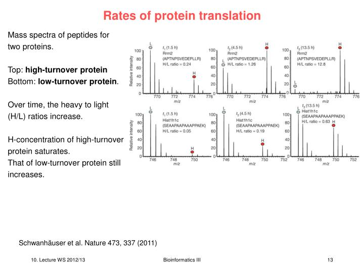 Rates of protein translation