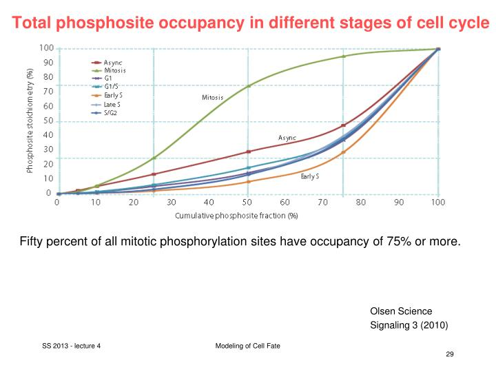 Total phosphosite occupancy in different stages of cell cycle