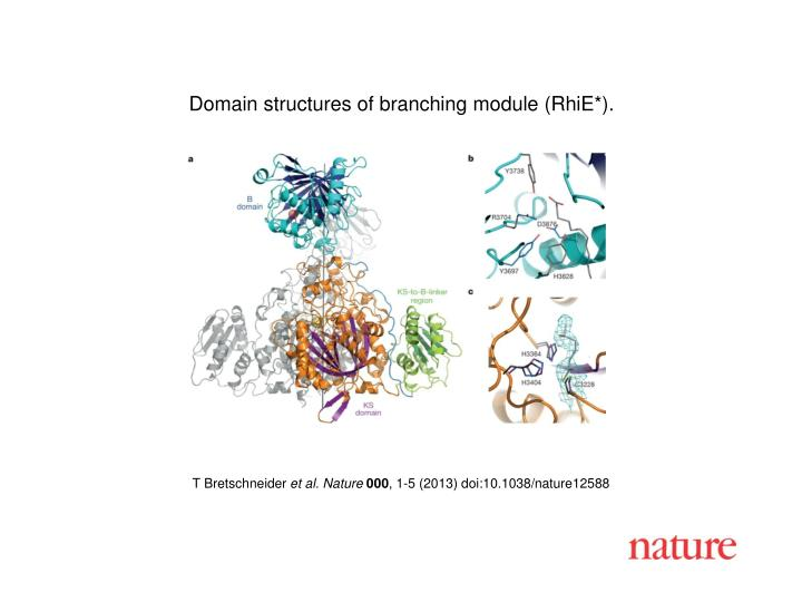Domain structures of branching module (RhiE*).