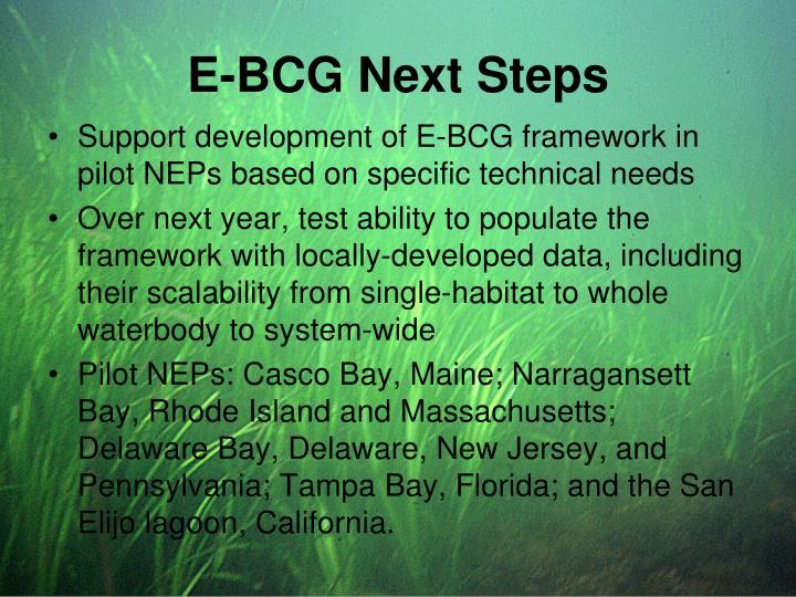 E-BCG Next Steps