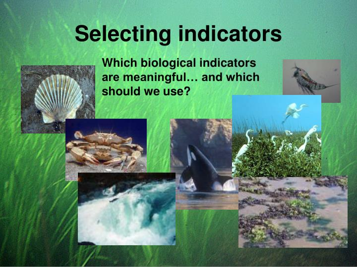 Selecting indicators