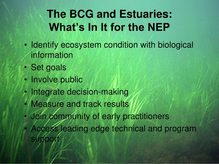 The BCG and Estuaries: