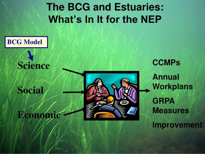 BCG Model