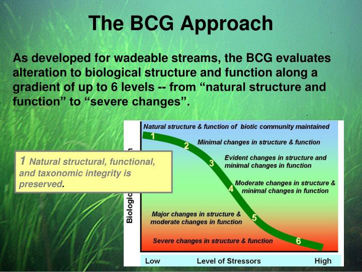 The BCG Approach