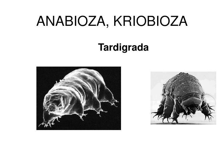 ANABIOZA, KRIOBIOZA