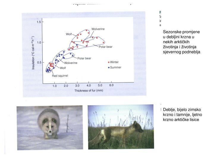 Sezonske promjene u debljini krzna u nekih arktičkih životinja i životinja sjevernog podneblja