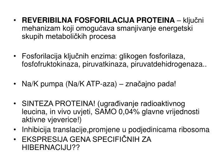 REVERIBILNA FOSFORILACIJA PROTEINA