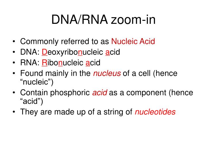 DNA/RNA zoom-in