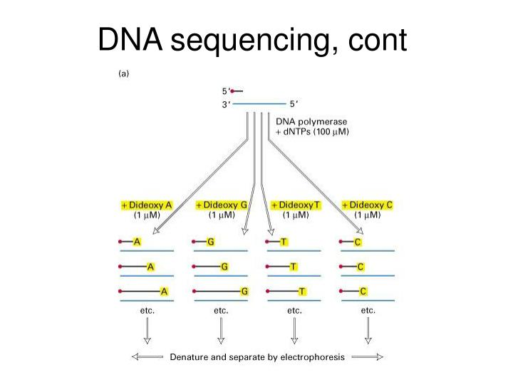 DNA sequencing, cont
