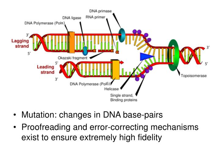 Mutation: changes in DNA base-pairs