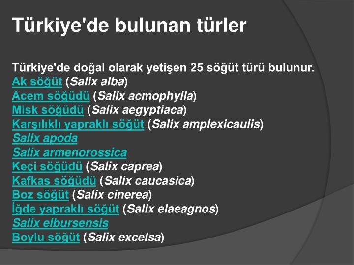 Türkiye'de bulunan türler
