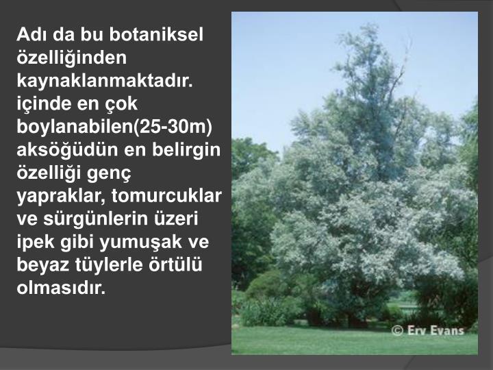 Adı da bu botaniksel özelliğinden kaynaklanmaktadır.
