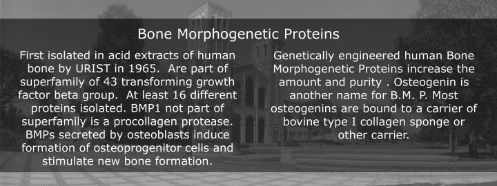 Genetically engineered human Bone Morphogenetic Proteins increase the amount and purity . Osteogenin is another name for B.M. P. Most osteogenins are bound to a carrier of bovine type I collagen sponge or other carrier.