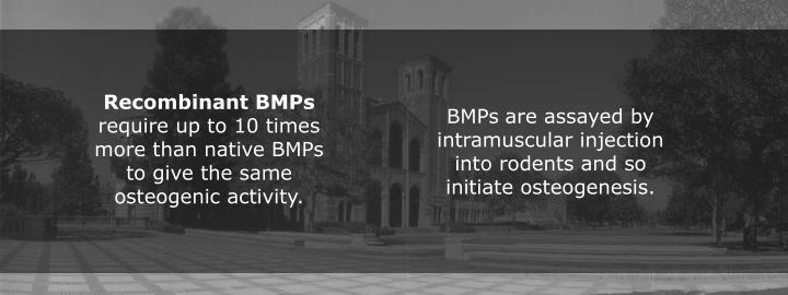 Recombinant BMPs