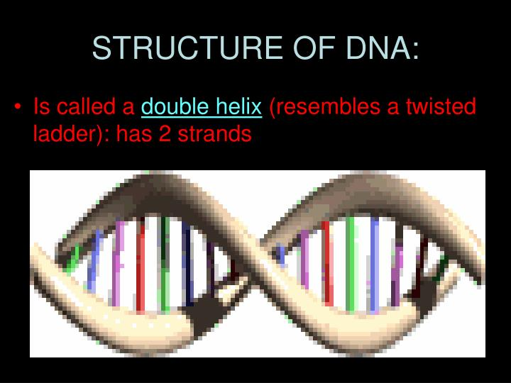 STRUCTURE OF DNA: