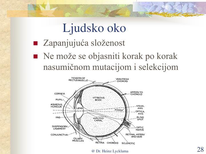 Ljudsko oko
