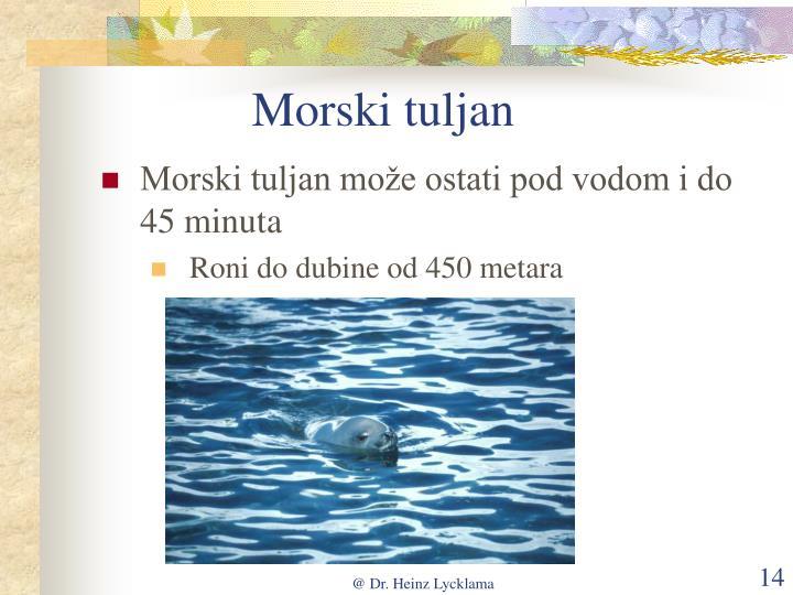 Morski tuljan