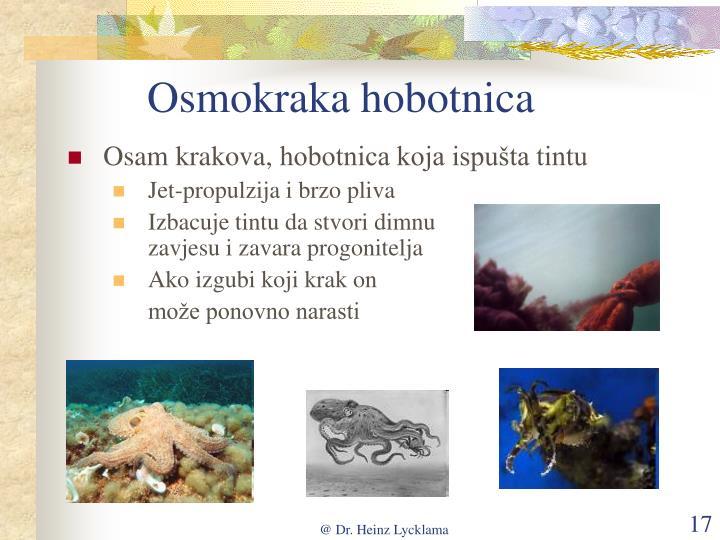 Osmokraka hobotnica