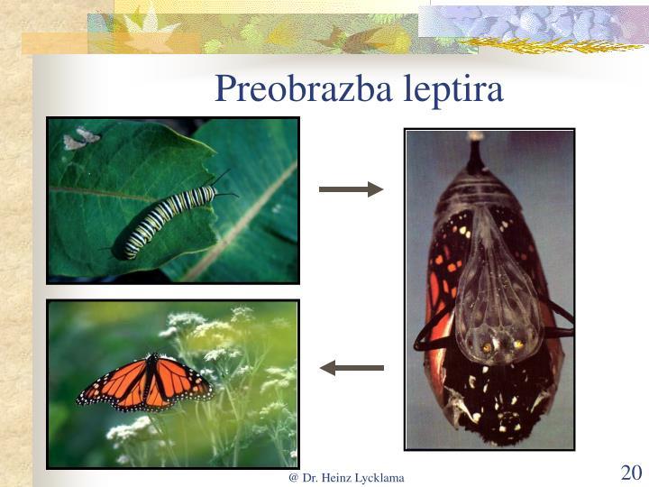 Preobrazba leptira
