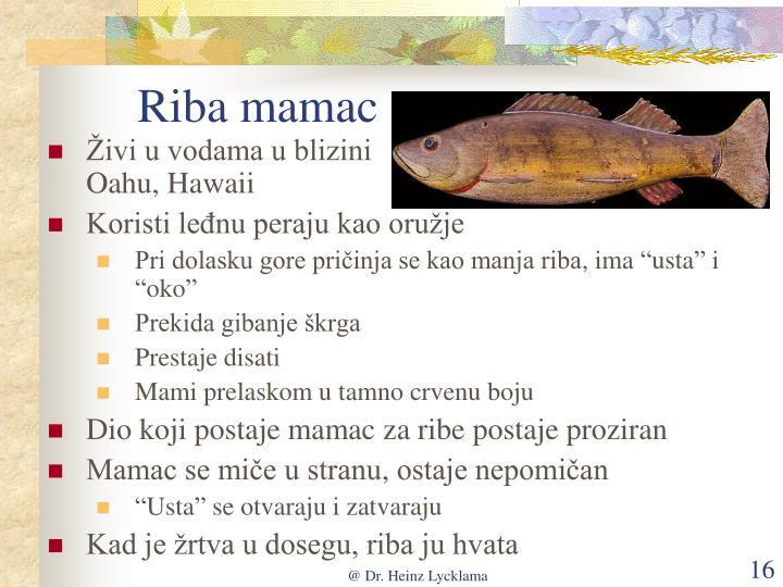 Riba mamac
