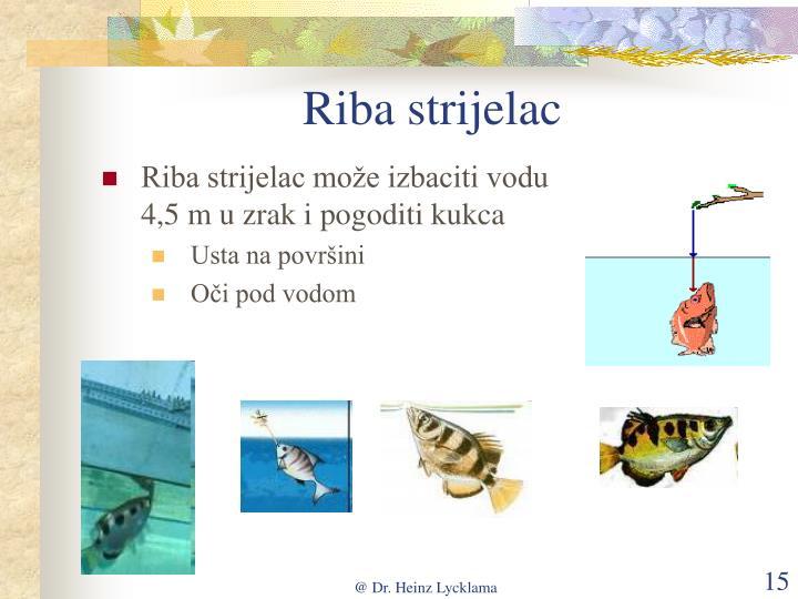 Riba strijelac