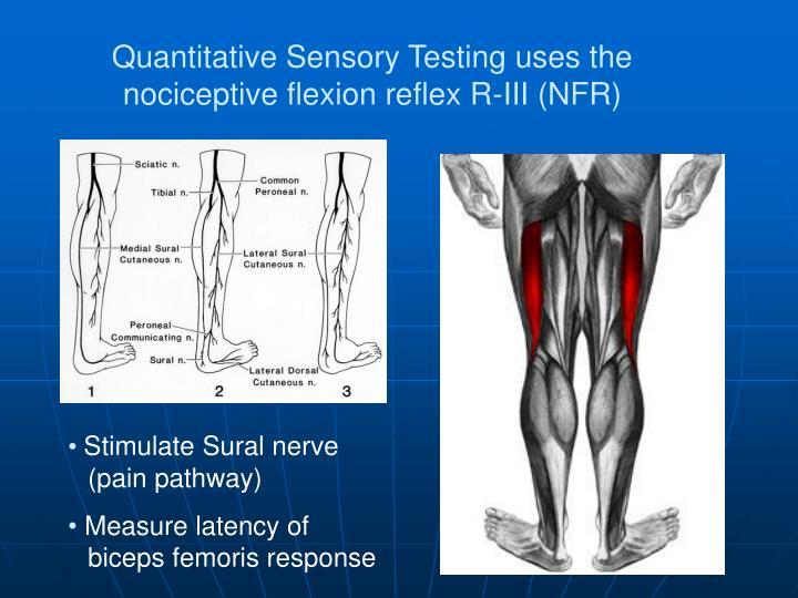 Quantitative Sensory Testing uses the nociceptive flexion reflex R-III (NFR)