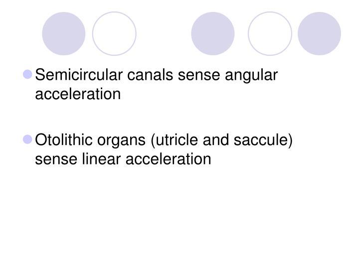 Semicircular canals sense angular acceleration