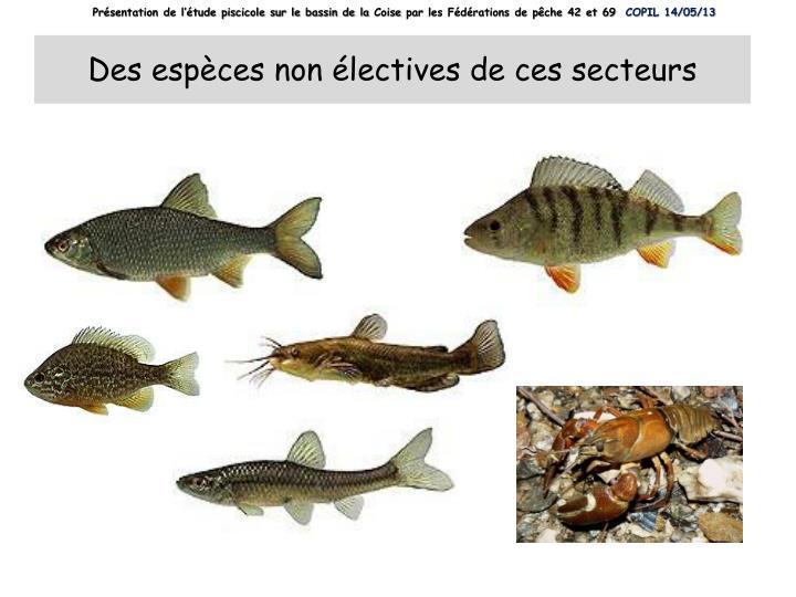 Présentation de l'étude piscicole sur le bassin de la