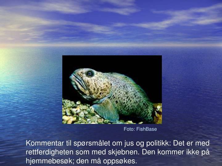 Foto: FishBase