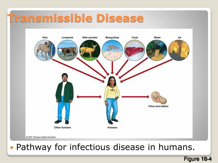 Pathway for infectious disease in humans.