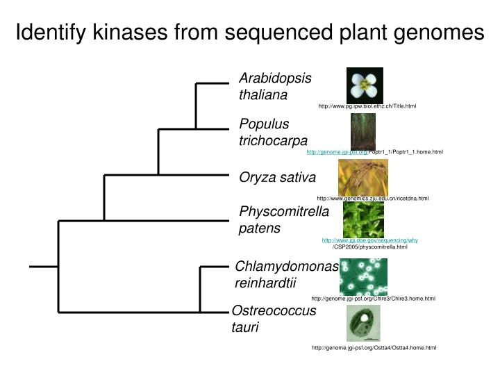 Identify kinases from sequenced plant genomes
