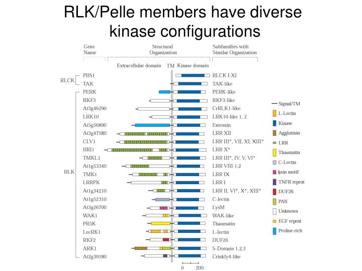 RLK/Pelle members have diverse