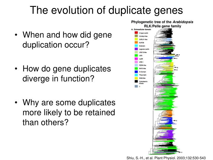 The evolution of duplicate genes