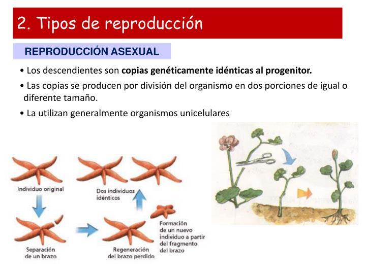 2. Tipos de reproducción