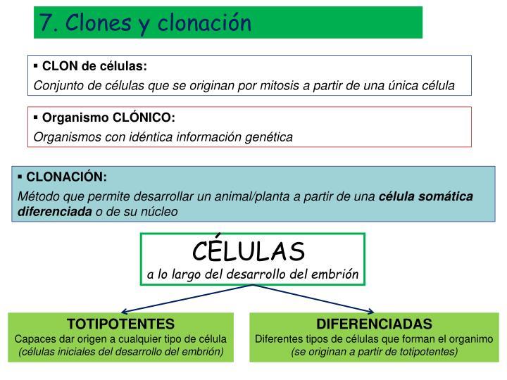 7. Clones y clonación