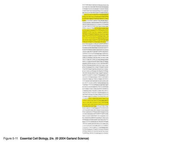 05_11_Gene_sequence.jpg