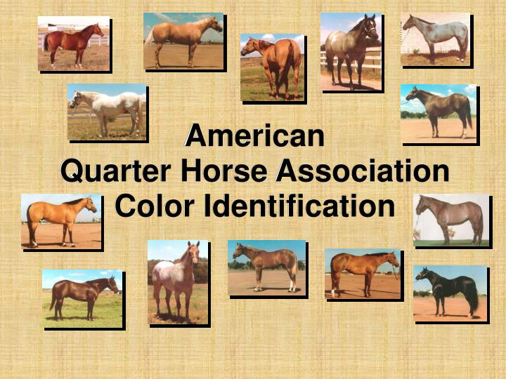 American quarter horse association color identification